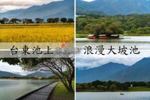 『台東池上』國家級濕地保護區,擁有豐富生態湖泊,是散步放鬆好景點|池上大坡池交通、停車