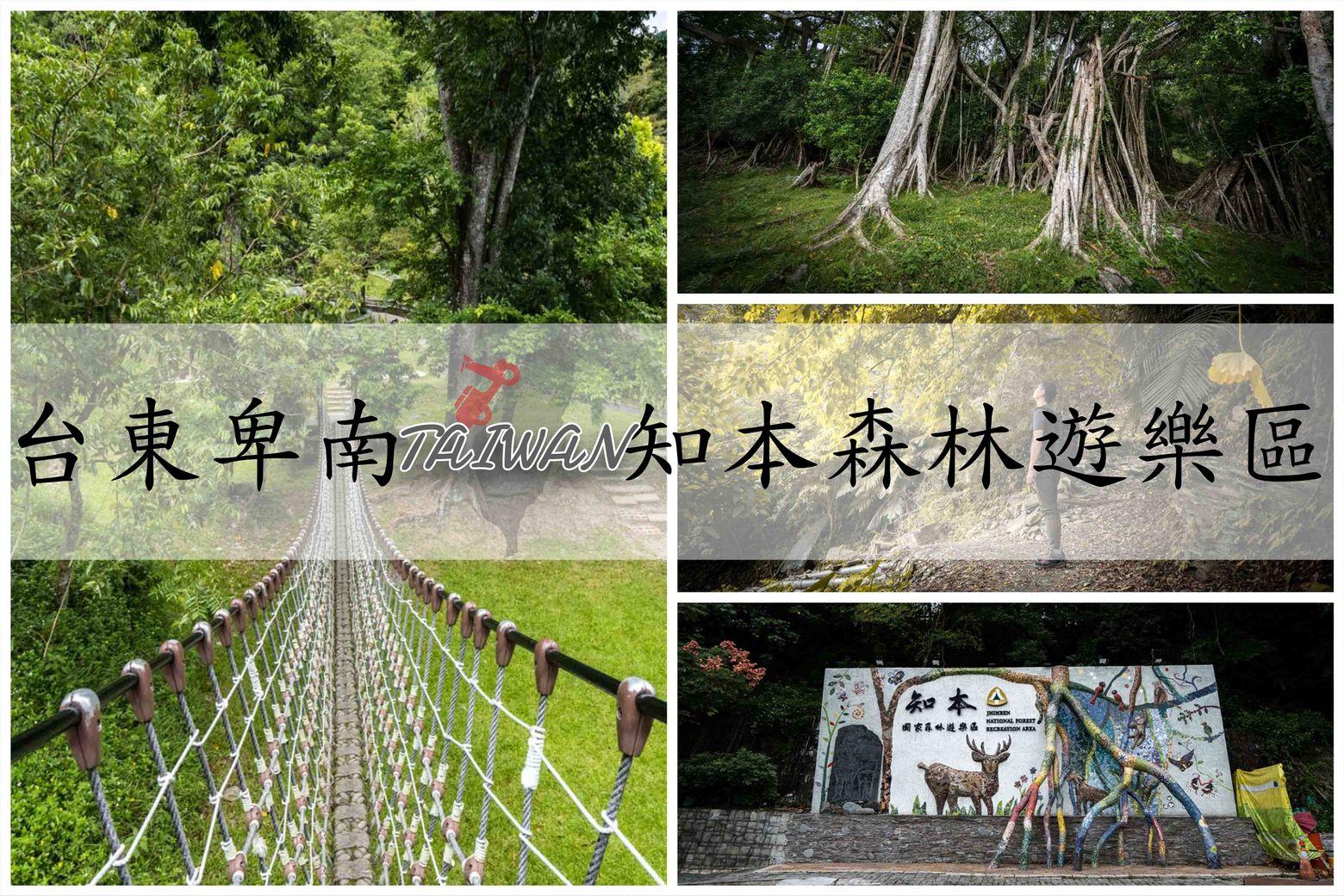 『台東卑南景點』天然森林浴超放鬆,知本國家森林遊樂區|豐富生態,千根榕、好漢坡,野生動物