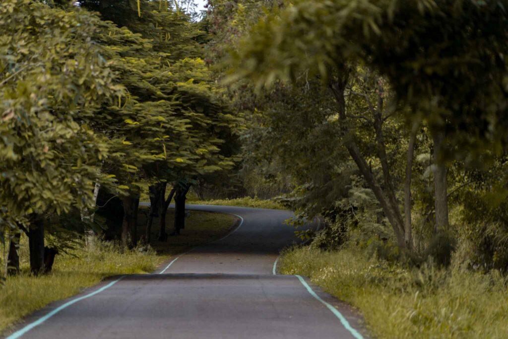 台東森林公園黑森林