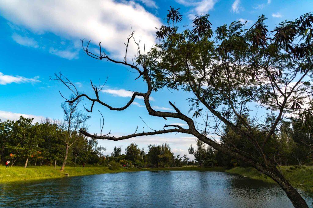 台東森林公園 琵琶湖