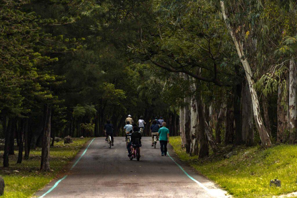 台東森林公園人造林