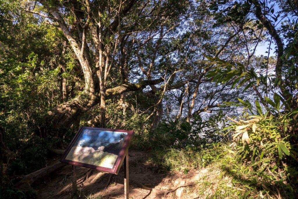 都蘭山登山步道稜線