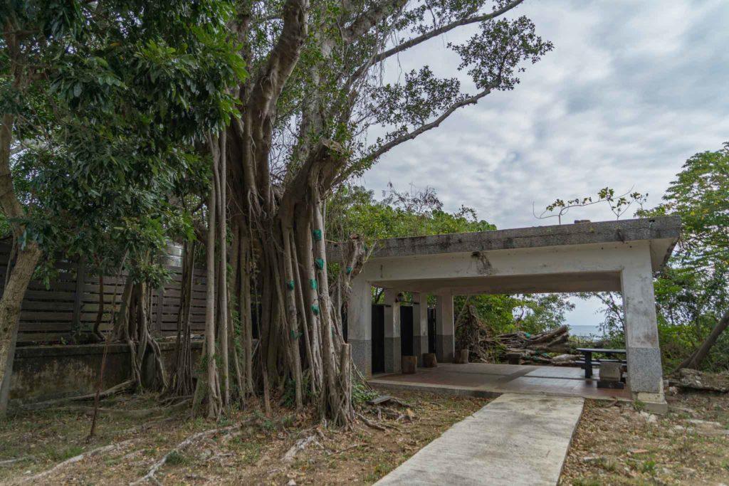 老樹休息區