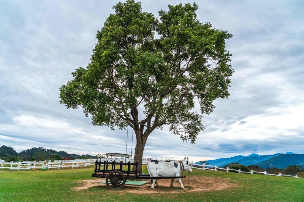 初鹿牧場的樹