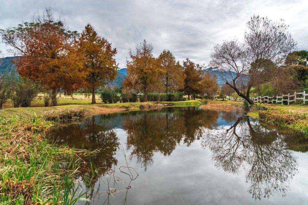 初鹿牧場落雨松跟生態池